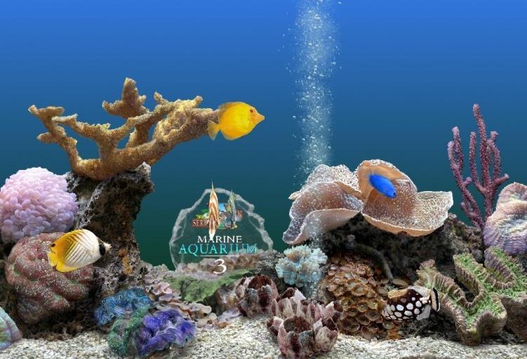 这款精美的海底热带海底世界热带鱼的动态屏保程序,非常精美,但是可能
