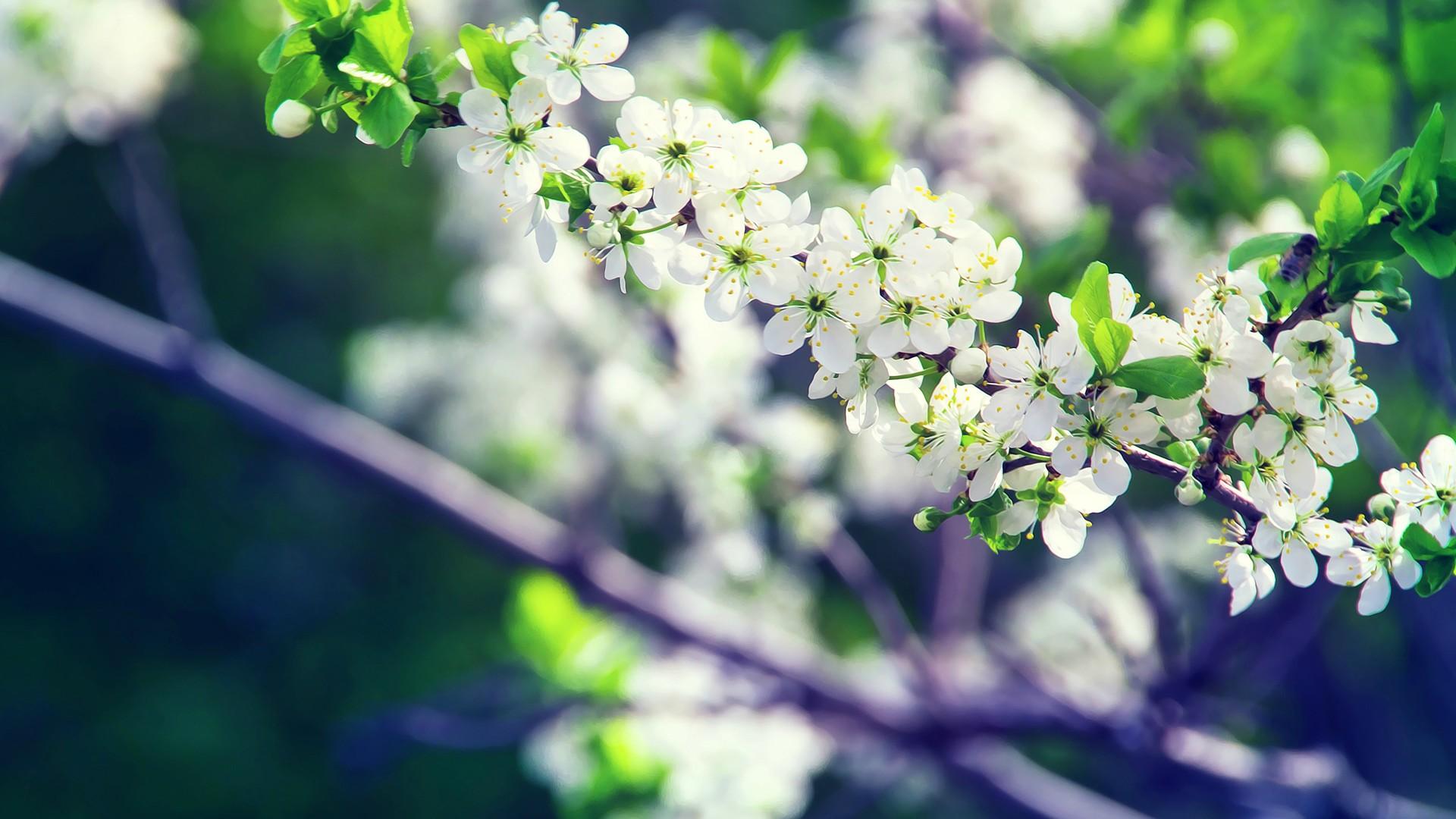 > 小清新花卉养眼桌面壁纸图标