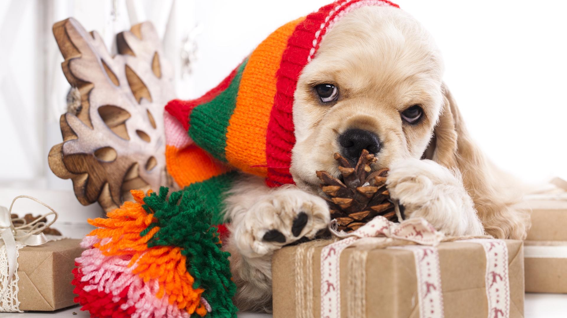 > 圣诞节可爱宠物装扮电脑壁纸
